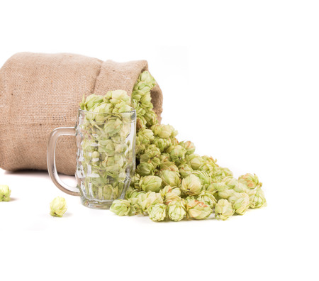 Bag and glass full of green hop cones. Isolated on a white background. photo
