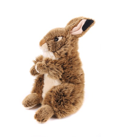 Cute easter rabbit. Isolated on a white background. photo