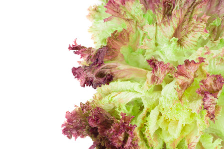 lactuca: Red lettuce isolated on white. Whole background. Stock Photo