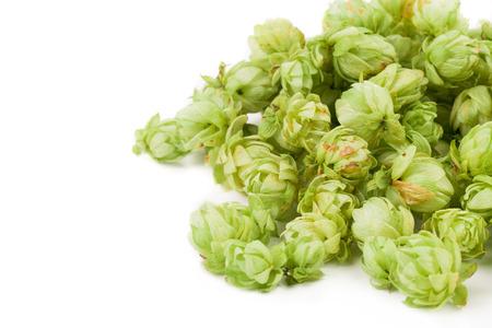 lupulus: Fresh green hops, isolated on white background Stock Photo