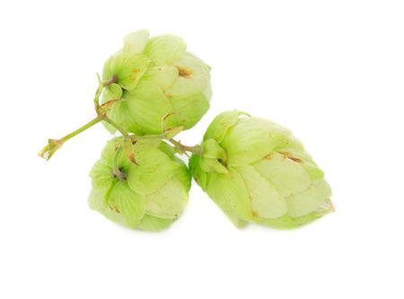 beautiful hop isolated on white background closeup photo