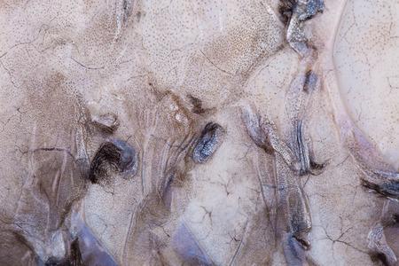 rutilus rutilus: Fish Scales ,Close Up Shot Texture as background