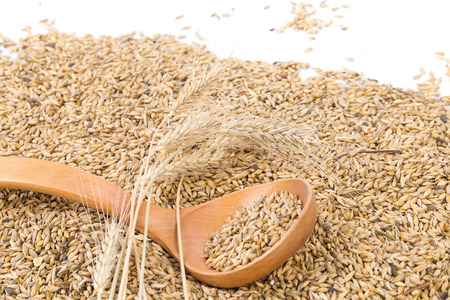 malted: Closeup of wheat grains with wood spoon.