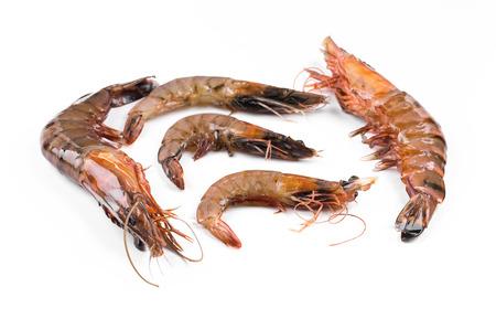tiger shrimp: Fresh tiger shrimp on a white background