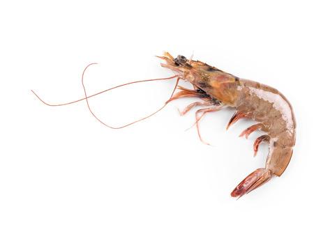 tiger shrimp: Raw tiger shrimp on white. Isolated on a white background.