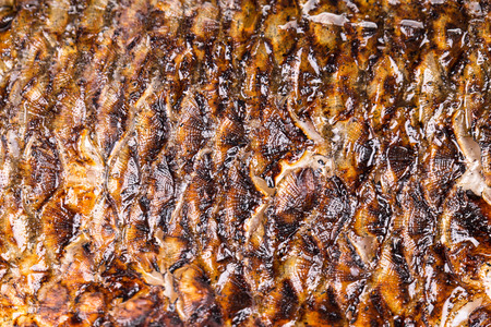 escamas de peces: Escamas de pescado frito. Para ser utilizado como fondo.