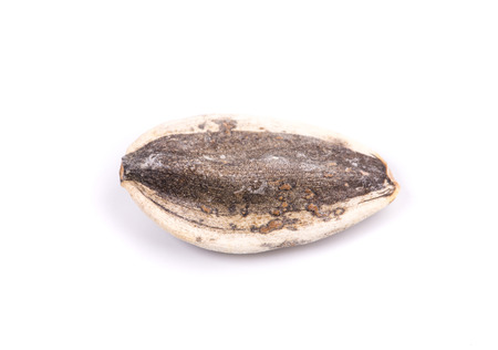 derive: Black sunflower seed. Isolated on a white background.