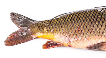 mirror carp: Raw fish carp. Isolated on a white background. Stock Photo