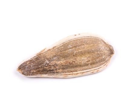 semen: Sunflower seed. Isolated on white background
