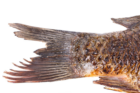fish tail: Grilled carp fish tail. Isolated on a white background.