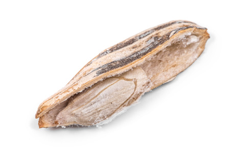 semen: Close up of opened sunflower seed. Isolated on a white background. Stock Photo