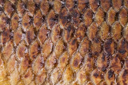 escamas de peces: escamas de pescado frito. Como tel�n de fondo aislado en primer plano Foto de archivo