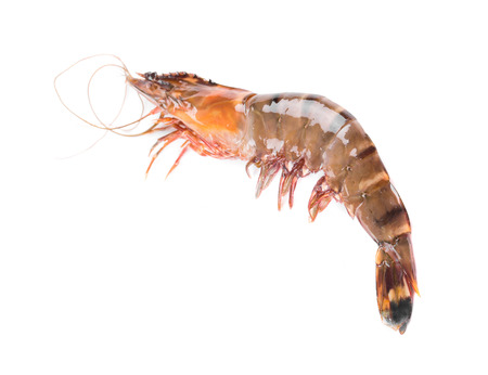 tiger shrimp: Raw tiger shrimp. Isolated on a white background.
