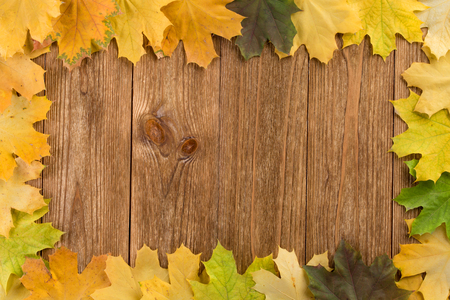autumn background: Autumn leaves frame on the wooden background