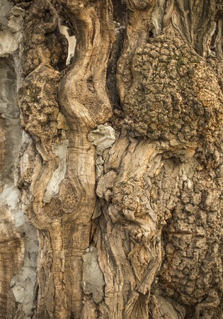 fissures: Fissures on elm tree bark treated against wetwood, a close-up Stock Photo