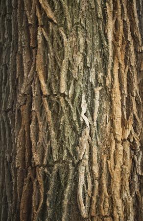 ashy: Ashy elm tree bark, a sunlit close-up in park