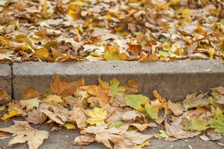 curb: A beautiful autumn closeup: yellow maple leaves against grey concrete curb and asphalt road in a city park