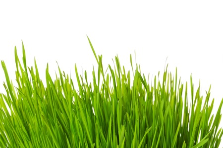 tuft: A closeup view on a tuft of green grass isolated on white background