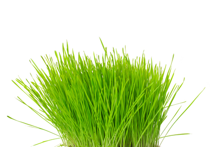 tuft: A tuft of green grass isolated on white background