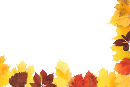 Frame of autumn leaves. Leaves are on the white background. Stock Photo