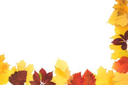 Marco de las hojas de otoño. Las hojas están en el fondo blanco. Foto de archivo - 80903070