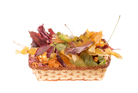 Composition of autumn leaves. Isolated on the white background. Stock Photo