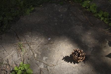 Pine cone and shadow. Sunrays illuminates a pine cone on a rock. Фото со стока
