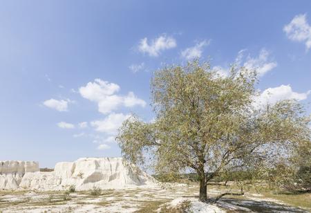 Beautiful rural landscape. Tall tree near a chalk quarry. Banco de Imagens