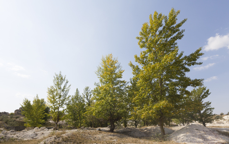 Beautiful rural landscape. Green trees near a chalk quarry.