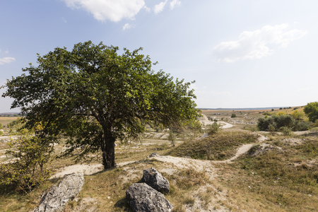 Landscape with lonely tree. Fruit tree on a hill. Banco de Imagens