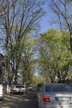 Beautiful spring day in the city. There are trees with bright new leaves and the blue sky.