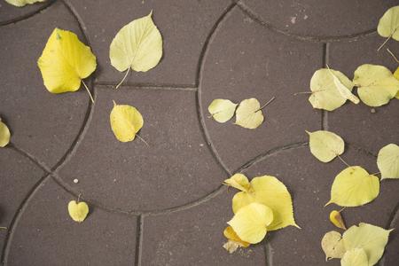 Herfst op een stad. Bladeren van lindeboom op een patroonbestrating. Stockfoto