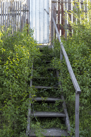 Old wooden stairs. The stairs is overgrouwn with shrubs.