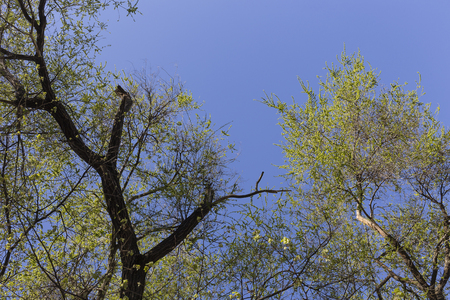 New leaves and the blue sky. That picture may be use as a background. Stock Photo