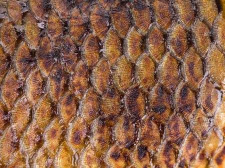 A goldish skin of a fried fish. This image may be used as a background.