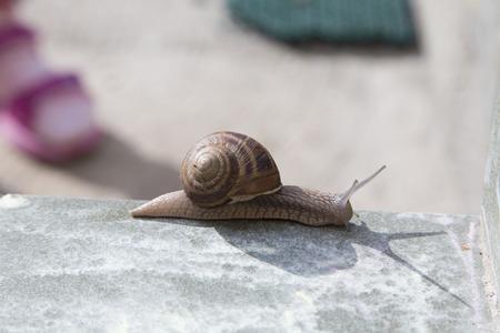 Very cute snail is sliding on ceramic tiles. Stock fotó