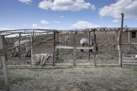 Two belgian horses grazing in a paddock. They are surrounded by wooden fencing with a vintage texture.