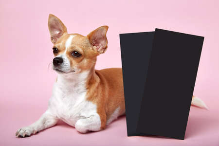 Small smart dog best friend on pink background studio with two card invitation or commercial.