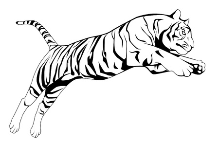 tiger jump Stock Vector - 17445006