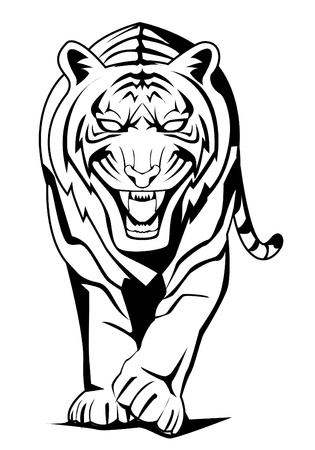 tiger walk Vector
