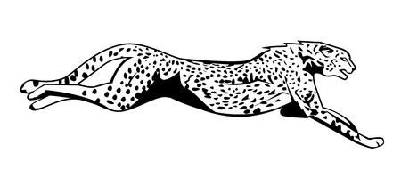cheetah: guepardo salto Vectores