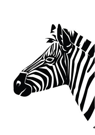 zebra Stock Vector - 17444567