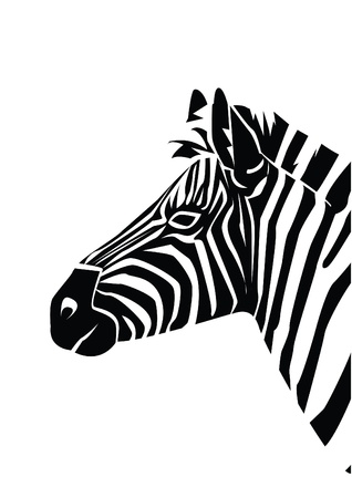 plains: zebra