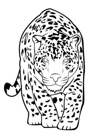 snow leopard: jaguar Illustration