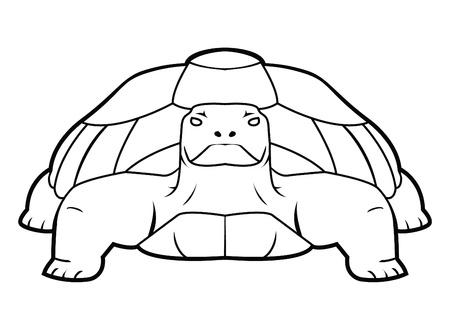 turtle Stock Vector - 17444583