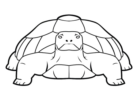 turtle Stock Vector - 17444583