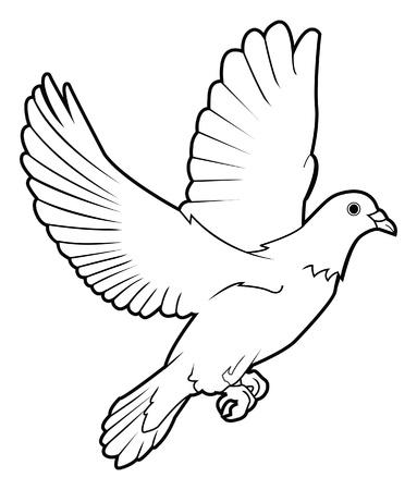paloma blanca: paloma de la paz Vectores