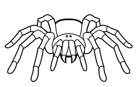 black widow: tarantula