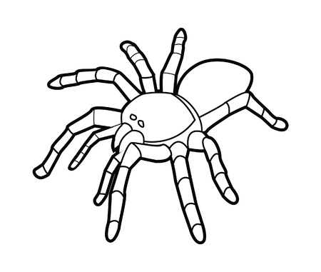 tarantula spider Stock Vector - 17444587