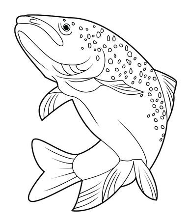 trucha: salmón pescado Vectores